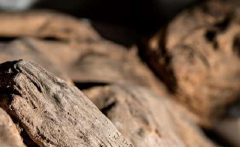 Смертоносный вирус оспы был обнаружен в мумии литовского ребенка